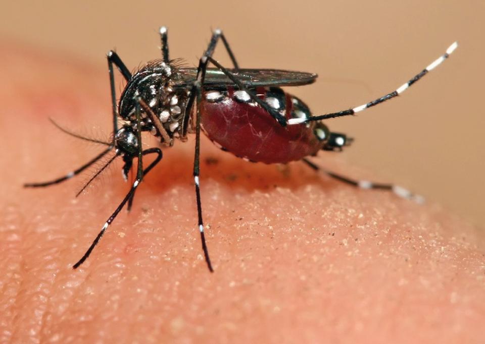 zyca virus